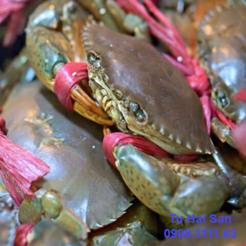 cua thịt biển cà mau hcm