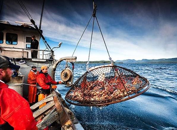 đánh bắt cua ngoài biển lạnh