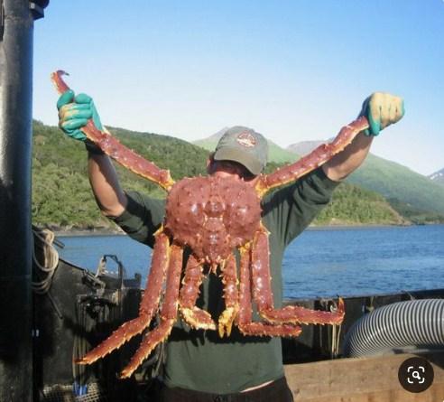 cua king crab to nhất