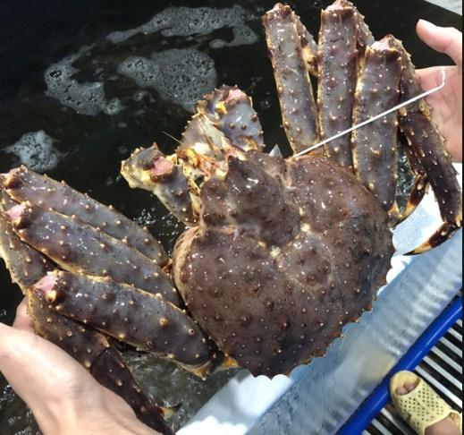 cua king crab gia rẻ