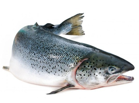 cá hồi đông lạnh nguyên con
